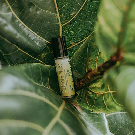 minyak kayu putih essential oil